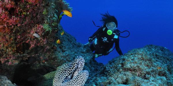 Scuba Diver encounters a Moray Eel